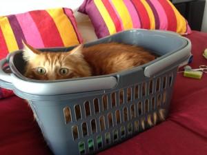 Feline Avenger Bed