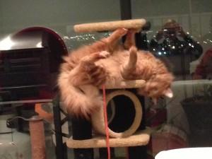 Feline Avenger Penthouse